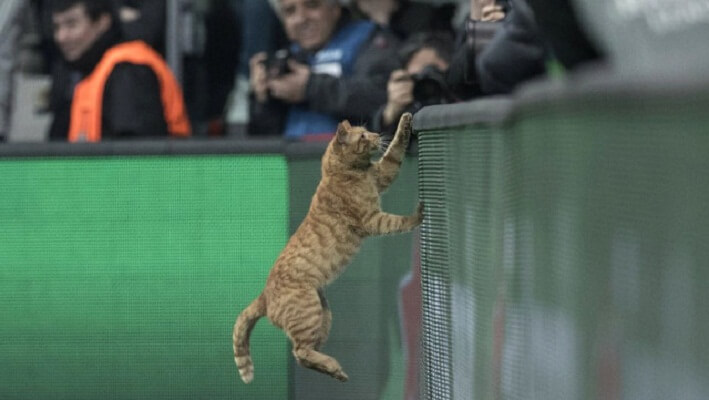 UEFA charges Besiktas over cat incident