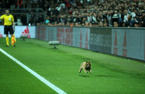 An orange cat runs down the byline at Vodafone Park